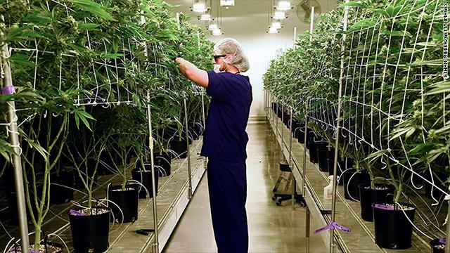 Atomic Blaze Online Smoke Shop ranks Grow Master or Botanical Specialist as one of the highest paying jobs in the canna industry